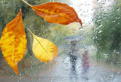 картинки осень наступила след улыбка осени лист штор под зеленые