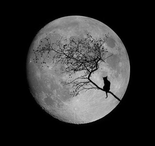Я решил пропылесосить Луну. Андрей Сметанин