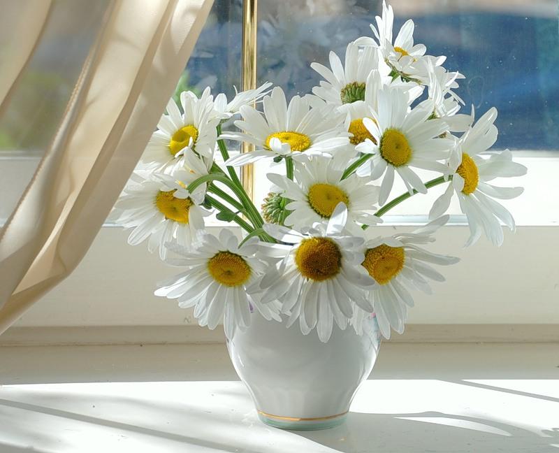 Ромашки в белой вазе на окне