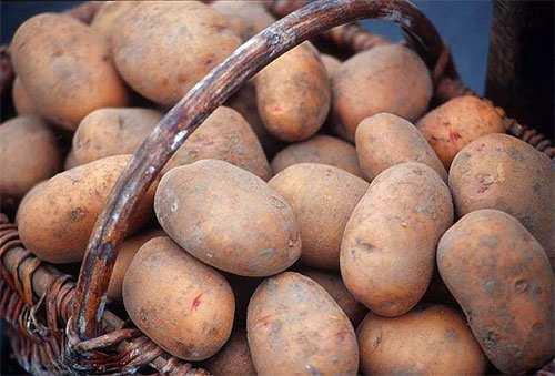 Уральцы могут готовиться к 100 рублям за кг картофеля - UralWeb.Ru.