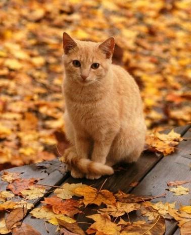 Рыжая кошка на мягких лапах.  Смотрит прищуренным желтым глазом, Рыжий.