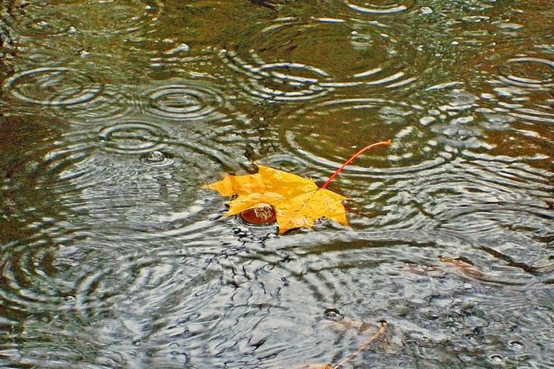 Дождь и осеннее утро