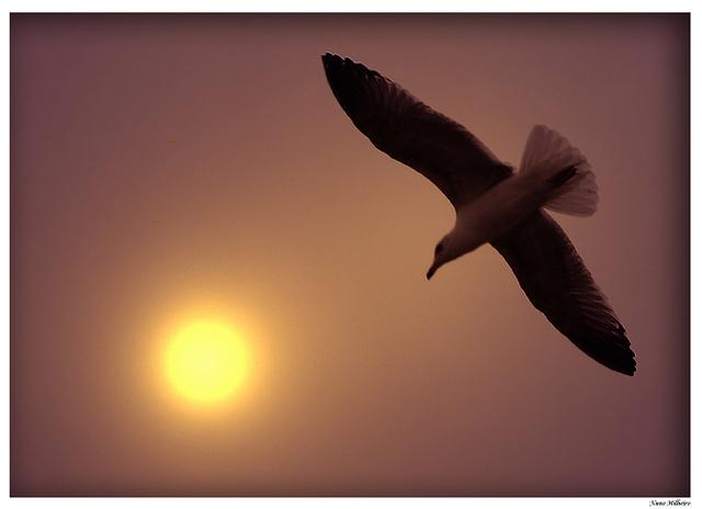 http://www.stihi.ru/pics/2009/10/20/2348.jpg