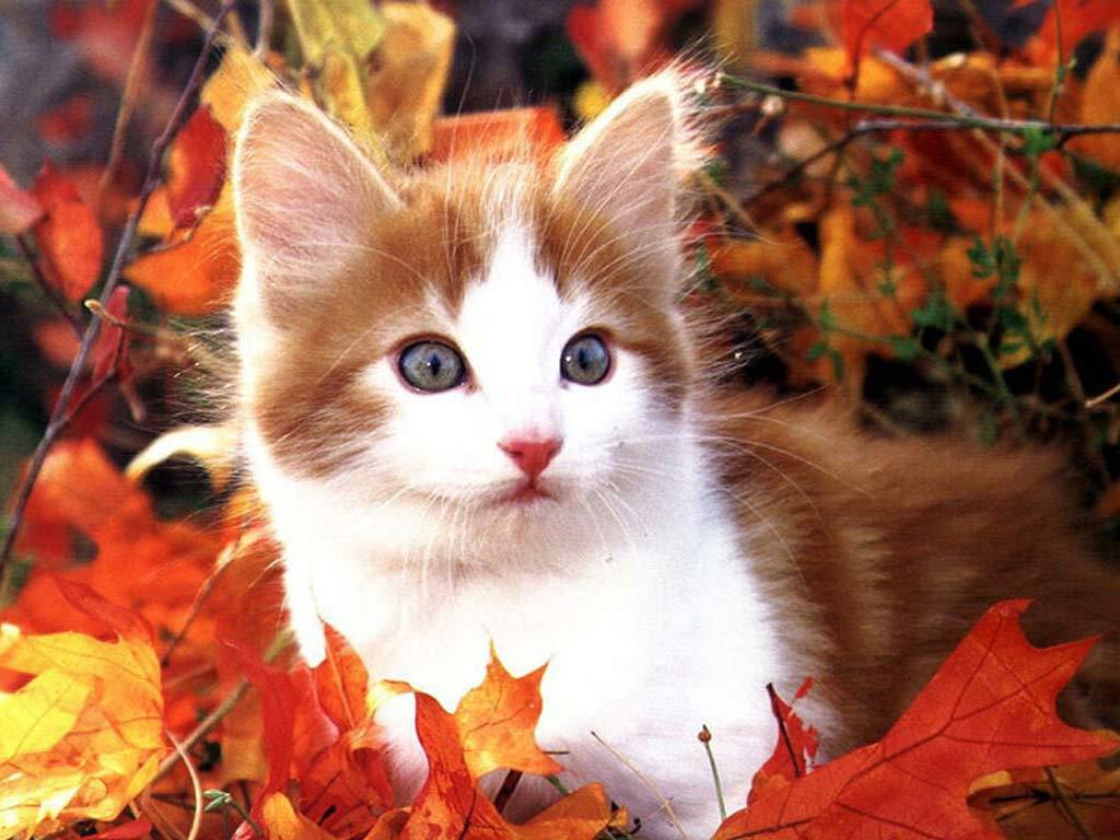Картинки котят осень