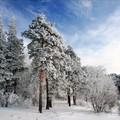Зима севера
