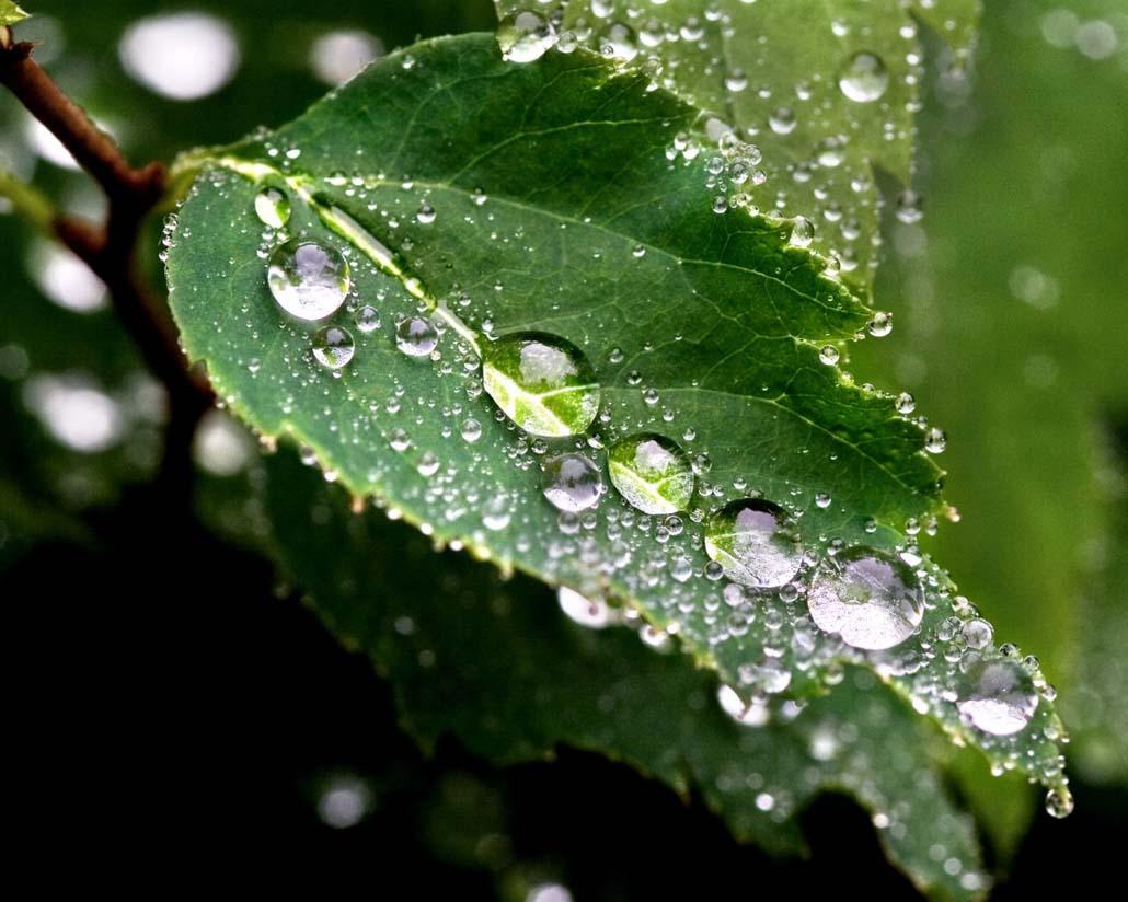 тому, открытка капелька дождя поэтому творчестве