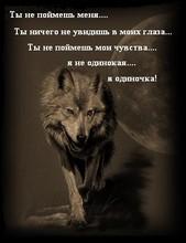 одинокая волчица картинки