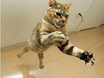 Кот в боевой стойке