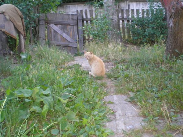 Поп и кот, или возвращение блудливого кота