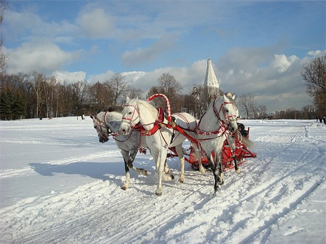 видео три белых коня