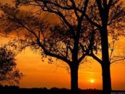 Картинки Два дерева на закате.