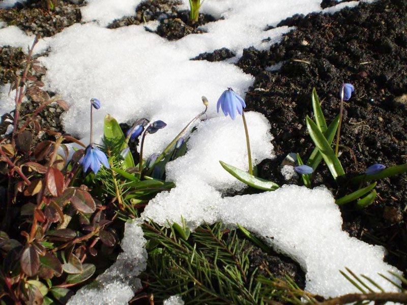 Солдаты Весны