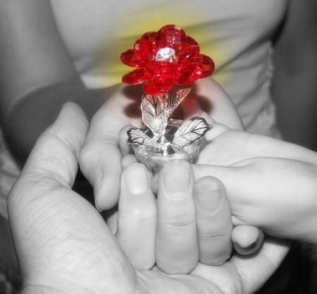 цветы любви фото