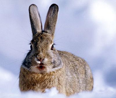 Как ефим на зайца охотился сказка 3