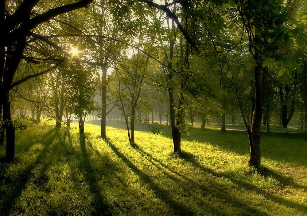 Весеннее утро