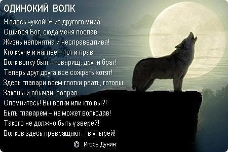Одинокие волки картинки