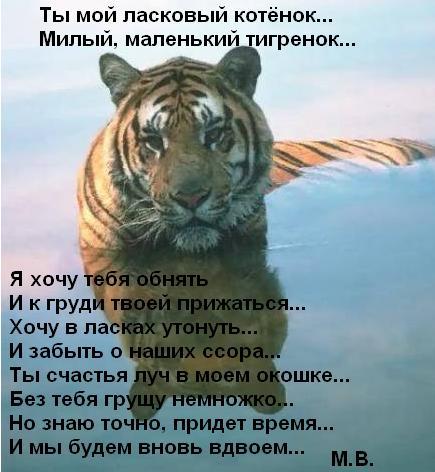 Открытка ты мой тигр 16