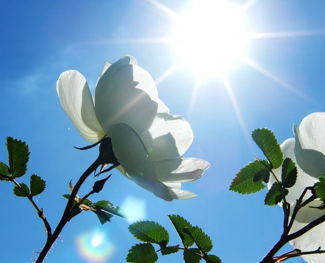 Картинки про красоту весны