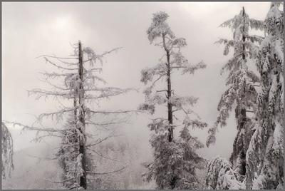 Зимняя правда о белом безмолвии