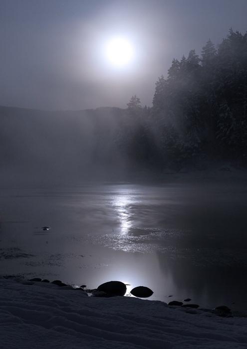 картинки на тему ночь и густой туман хищники