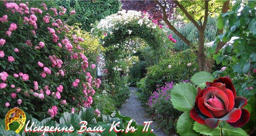 I never promised you a rose garden... (Конь Въ Пальто) / Стихи.ру