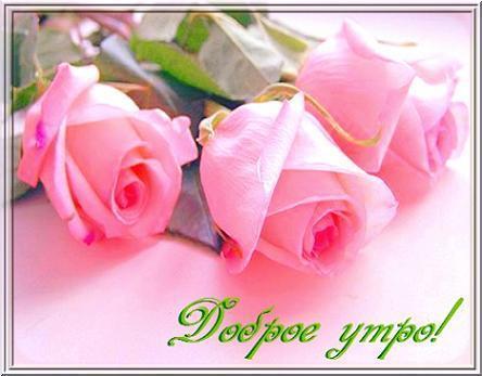 С добрым утром фото роз