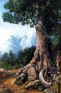Кедр с полным правом может быть назван энергетическим титаном среди деревьев.