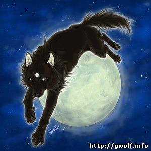 волк и луна картинки - фото 10