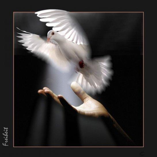 """Ангельские птицы - """"ЖИВАЯ ПЛАНЕТА""""- я.ру"""