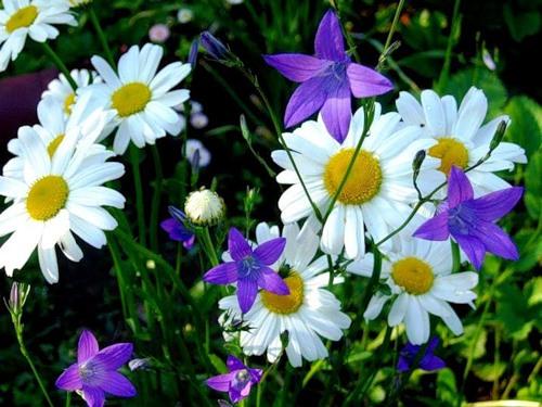 Скачать торрент цветы луговые