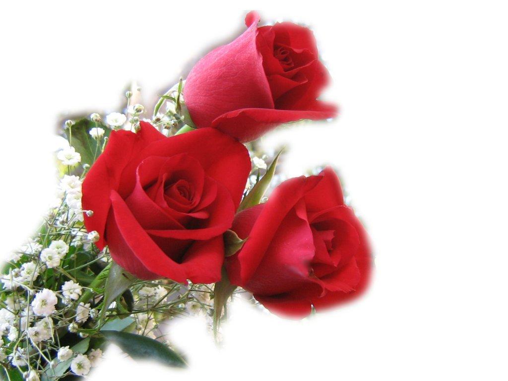 красный роза