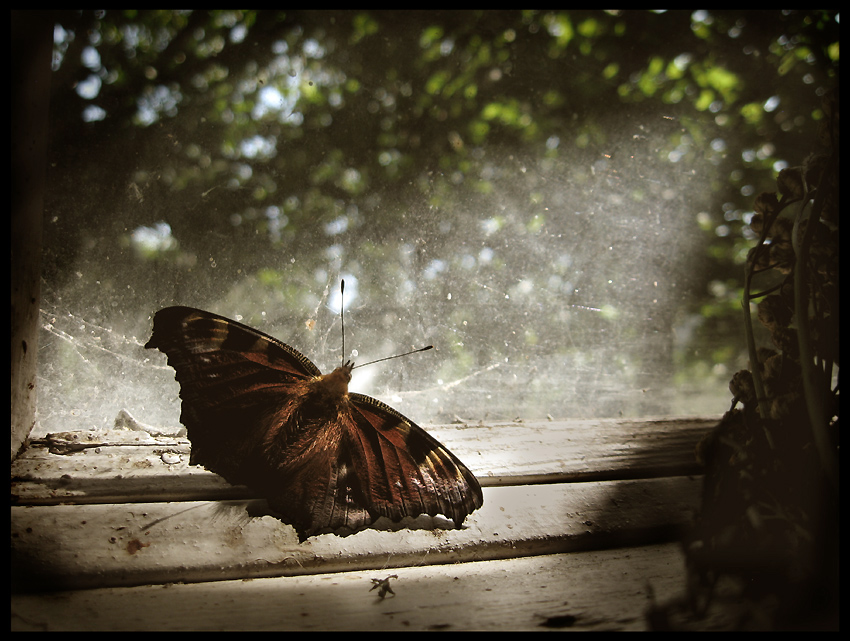 как ловить мотыльков в скайриме