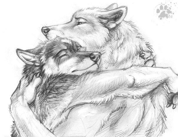 Волки тоже умеют плакать