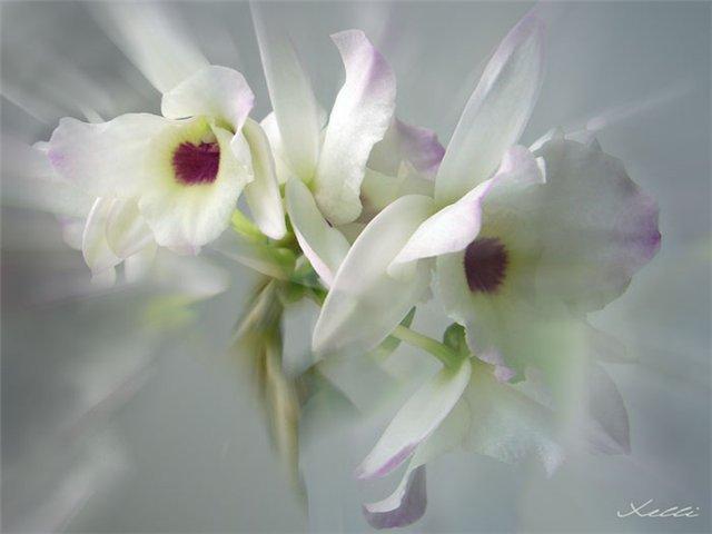 Необычных и самых красивых цветов