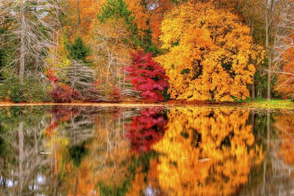 Осенний сад гульсара туктарова