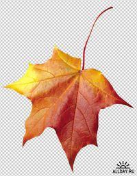 фото осенний листок