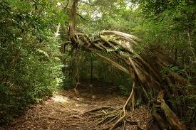 Да ла вьеха тропические деревья