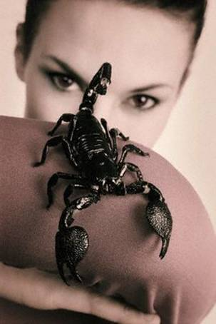 фото скорпион женщина