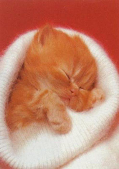 мой котик отдыхает))).