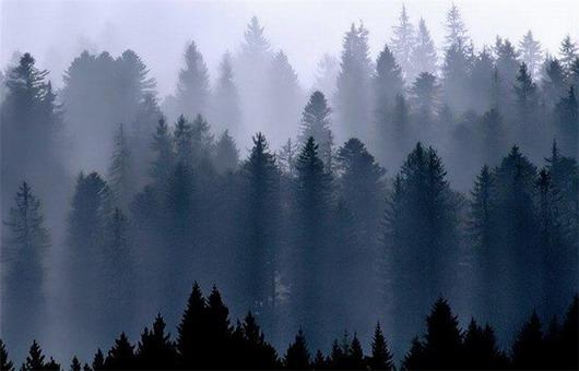 В серебристый осенний туман