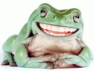 Жаба и жаба (Гуд Бай) / Стихи.ру