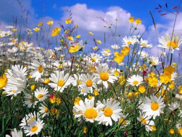Цветок в раю 5