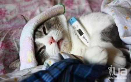 Заболела кошка Шура (Нюша Снегурская) / Стихи.ру