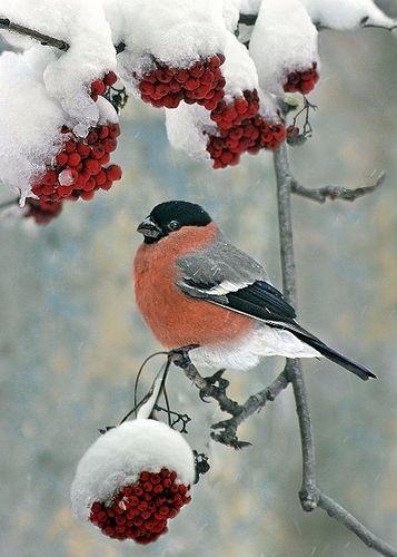 http://www.stihi.ru/pics/2010/12/09/8612.jpg