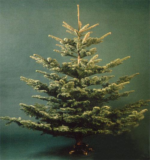 Новосибирские лесхозы начали заготовку новогодних елок.  В этом году ни один...