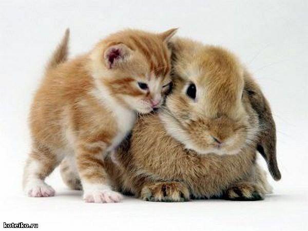 Кот кролик и близнецы всё о них
