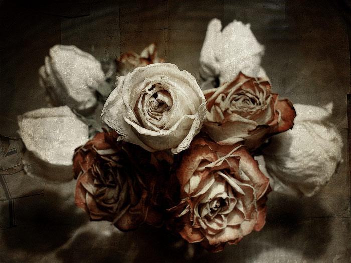 Картинки увядших цветов