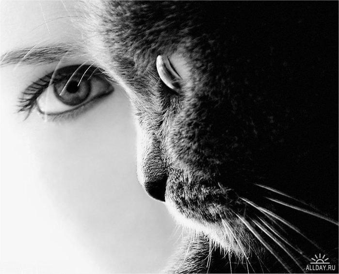 фото кошка девушка