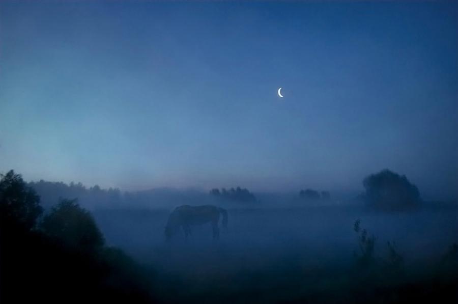 песня про лошадку слушать