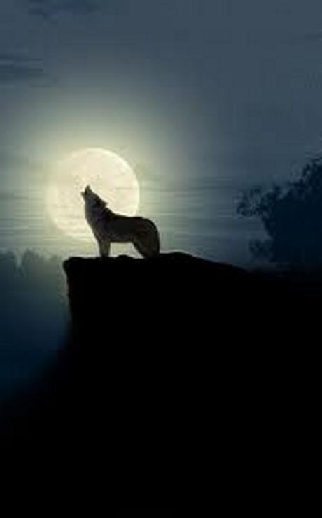 И волки воют на луну